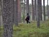 Erland i skogen