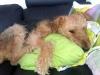 Sovhunden