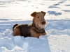 Tess i snön