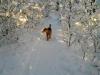 Zack i snön