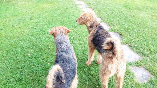 Vilma och Theo